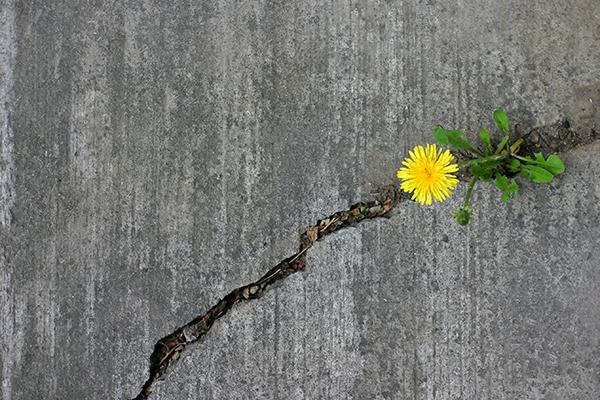 Hvordan øke viljestyrken og utrette mer?
